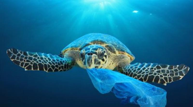 Ανακοίνωσητης Διεύθυνσης Δημόσιας Υγείας και Κοινωνικής Μέριμνας τηςΠεριφέρειας Κεντρικής Μακεδονίας σχετικά με τις ενέργειες και τη λήψη μέτρων πρόληψης ρύπανσης της θάλασσας και των ακτών  από κάθε είδουςαπορρίμματα