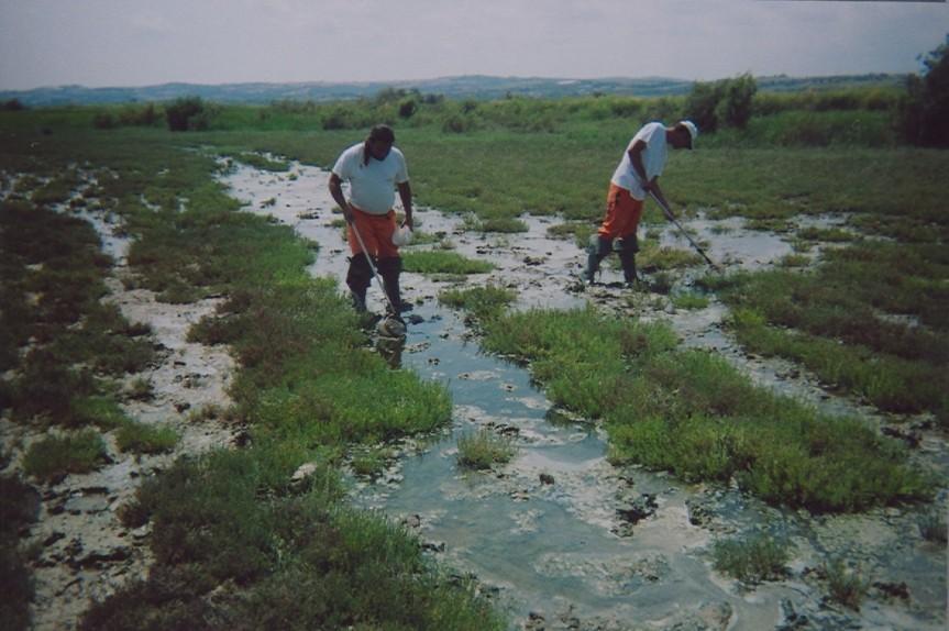 Ολοκληρώθηκε ο πρώτος κύκλος καταπολέμησης κουνουπιών στο δήμοΘέρμης